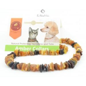 Baltic Amber Pet Collar P102